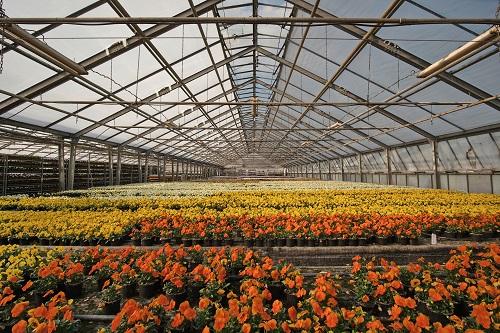 Фото анализ рынков растениеводства